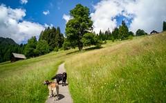 Bergwiesen (HausHimmelreich) Tags: himmelreich kleinwalsertal wandern hunde blumen wiesen berge sommer blauerhimmel