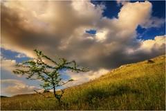 Der Frühling hat seine Schattenseite (linke64) Tags: thüringen deutschland germany natur landschaft wolken himmel frühling baum wiese