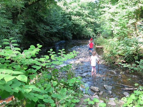 Reynoutria White River Loughill Limerick