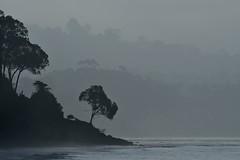 More's Landing (Marc Briggs) Tags: dsc2894aw goleta moremesa goletabeach moreslanding jordano giordano giacomogiordano pacific pacificocean seascape landscape ocean coast twallacemore mist haze water tree sea