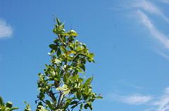 CHAPADA DO VEADEIROS - ALTO PARAISO GO (isaque_almeida...........registrando momentos) Tags: azul chapada veadeiros natureza goias brasil paraiso verde