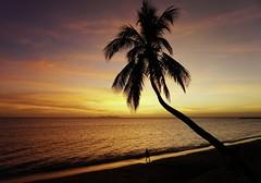 Fiji sunset (silverwine) Tags: sunset fiji denaruisland island holiday coconuttree palm pacific beach sun relax