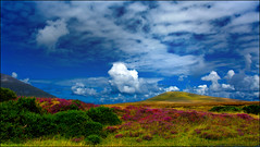 Heaven and Earth (angelofruhr) Tags: irland ireland wolken clouds heidekraut erika hügel kerry dingle pinnaclephotography
