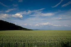 At the field (piri198) Tags: fuji fujifilm fujinon xe2s xc xc1545mmf3556oispz lightroom lightroomcc landscape landschaft cornfield kornfeld himmel sky bluesky