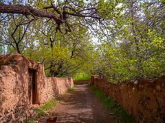 Walkway among the gardens in Abyaneh, Iran (CamelKW) Tags: 2017 abyana iran isfahan kashan