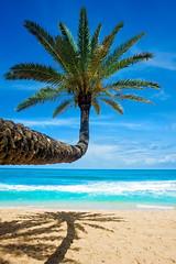 Tropical State of Mind (JMSF415) Tags: jorgemorenojrphotography ocean beach sky sea tree palmtree sand tropical hawaii hawaiilife hilife oahu northshore paradise travel explore landscape