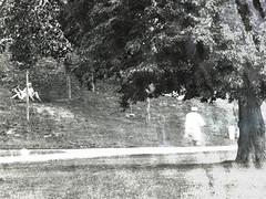 comme un songe (photosgabrielle) Tags: photosgabrielle noiretblanc bwmontreal bwphotography bw velo bike bicycle urban urbain parcjarry park nature