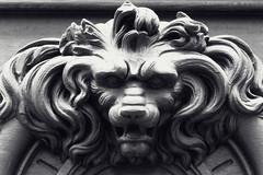 Tête de lion (Catherine Reznitchenko) Tags: rouen sculpture détail porte normandie france detail door extérieur outdoors monochrome animal noiretblanc lion tête head black white grey blanc blackwhitephotos wood bois carving