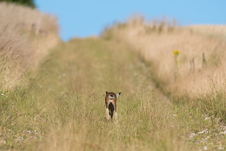 Hare today......110718_1-2.jpg