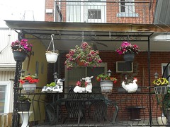 Animalia (navejo) Tags: montreal quebec canada balcony farmanimals hangingflowers railing cow sheep chicken