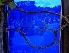 Blumen, Blüten - flowers and blossoms, effect- serie, blaues Fenster ,   76338/10286 (roba66) Tags: blau blue fenster glas glasfenster glass effect zweig branch art effecte effekt textur texture abstract kunst