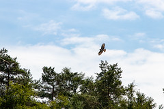 Two in flight (Photography by Martijn Aalbers) Tags: forest bos trees bomen leaves bladeren green groen branches takken path pad walk wandeling nature natuur colour kleur color sunny zonnig summer zomer light licht shadow schaduw canon eos 77d ef70200mm f4l is usm wwwgevoeligeplatennl utrechtseheuvelrug