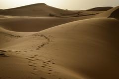 Light and Shade (Darren Poun) Tags: merzouga sahara desert morocco africa arab arabic sanddune nature landscape traveling sunset nikon d800 d800e nikkor58mm f14 ngc
