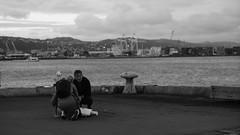 DSC06970 (A Common Courtesy) Tags: a common courtesy wellington auckland new zealand camera photo bw color black white day night monochrome bokeh sony nex 5a nex5a focuspeaking minolta mc pg 50mm 14rokkor fotodiox adapter