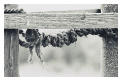 never loose hope (undefinable moods) Tags: hope rope life swing bw blackwhite wood dof nature countryside outside outdoor naturaleza natur seil holz schwarzweis knoten knot