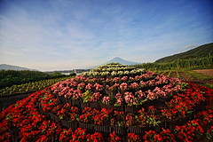 Lake Kawaguchi Herb Festival (ULTRA Tama) Tags: lake kawaguchi herb festival mtfuji mtfujiwhc japan shizuoka fuji todays dayliphoto instadaily photogenic igjapan loversnippon worldcaptures flickrfriday welovef july 2018 worldheritage tabijyo genicmag retripjapan retripshizuoka explorejapan traveljapan