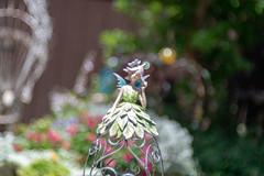 the Bokeh Fairy (Dotsy McCurly) Tags: meyeroptikgoerlitztrioplan100mmf28 nikond850 manuallens russian bubbly bokeh nature beautiful fairy yard nj newjersey flowers handheld meyeroptikgörlitztrioplan28100mm