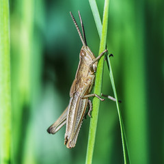 these two are mine! (ErrorByPixel) Tags: k5 fauna pentax grass blades green animal insect nature macro