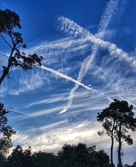 Escrivint el cel  - Writhing the sky (Miquel Lleixà Mora [NotPRO]) Tags: sky clouds nuvols contrallum trees arbres verd backlight natura nature igersmaresme igerscatalunya igers igersmataro esteles