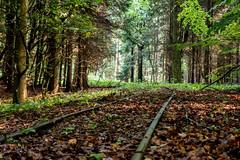 Abandoned Tracks (Thomsen07) Tags: nysted ålholm hestehave ålholmhestehave spor abandoned tracks abandonedtracks skov wood forest sony sonyrx sonyrx100 sonyrx100m3