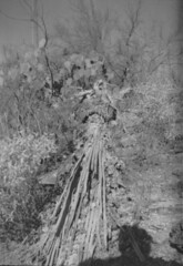 Ansco Cadet 07 (thesnapshotinitiative) Tags: ansco b2 cadet 120 film vintage camera sabino lake trail hike canyon caffenol fomapan