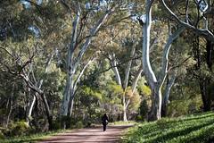 """Australian trees (Mario Graziano) Tags: flindersranges southaustralia australia au nofilter nofilterneeded nofilters """"south australia"""" alberi trees outback entroterra backofbeyond bush """"ikaraflinders ranges national park"""" ikaraflinders ranges"""" """"national """"wilpena pound"""""""