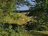 Daily view ..... (louise peters) Tags: view uitzicht koeien cows charolais garden tuin boomgaard orchard creantay burgundy bourgondië bourgogne france frankrijk green groen grass landscape landschap