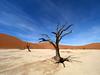 Sossusvlei dunes saltpan deadvlei (Nevrimski) Tags: sossusvlei dunes saltpan deadvlei dead tree