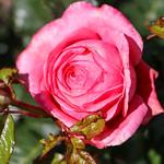 Maig_0135 thumbnail