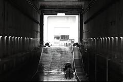 1er jour à Lorient (18) (Sebmanstar) Tags: lorient quimperle bretagne france french base europa europe architecture explore travel tourisme tourism traveler ocean paysage historique histoire history historic water ville visite batiment visiter keroman sousmarins submarines bateaux boat britain morbihan