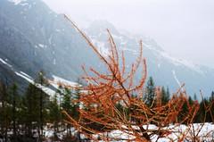 (Koyuki91) Tags: montagne mountain alpes frenchalps ektar 100 ektar100
