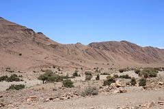 Aiounet Torkoz, Morocco (vojtechvita) Tags: aiounettorkoz morocco desert desertlife sahara nature naturephoto naturephotography wild wildlife wildlifephoto wildlifephotography landscape canon canon6d