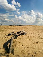 Parco Nazionale De Hoge Veluwe (Itinerari Camper) Tags: viaggi olanda travel camper itinerari nederland paesibassi holland