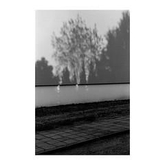 . . . . . #shootfilm #filmphotography #bw #bwfilm #streetphotography #filmcommunity #nikon #nikkor #nikonf2 #micronikkor #nikkor55mm #fomapan #foma #fomapan100 @fomapanfilm @adox_official #rodinal #push #pushfilm #borderlands (Jonas.Bergmeier) Tags: shootfilm filmphotography bw bwfilm streetphotography filmcommunity nikon nikkor nikonf2 micronikkor nikkor55mm fomapan foma fomapan100 fomapanfilm adoxofficial rodinal push pushfilm borderlands
