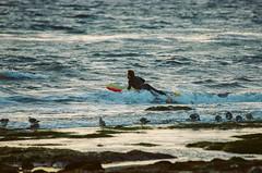Surfer Paddles Out at Coal Oil Point (beltz6) Tags: surf surfing f100 nikonf100 nikon film analog expiredfilm kodak goleta coaloilpoint santa barbara santabarbara santabarbarachannel
