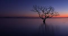 Not That Tree. (williams.darrell53) Tags: landscape wanaka australia canon samyang sun sky