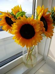 sunflowers 197/365 (auroradawn61) Tags: athome lumixgx80 sunflowers hamworthy poole dorset uk england july summer 2018 365daysin2018 flowers vase