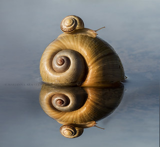 double snail reflection
