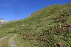 combe des Planards (bulbocode909) Tags: valais suisse bourgstpierre valdentremont combedesplanards montagnes nature chemins paysages fleurs rhododendrons vert bleu rouge