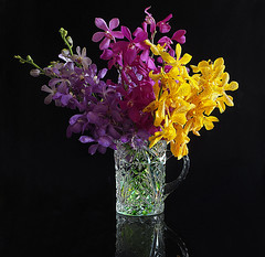 Just Orchids (Smiffy'37) Tags: stilllife glass vase flowers orchids blackbackground colourful