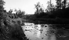 DSCF3717 (Scott Martin Calgary) Tags: fishcreekprovincialpark calgary alberta canada ca blackwhite fujifilmxe2 fishcreek creek trees