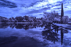 Clouds Over Santee Lakes - Infrared (Bill Gracey 20 Million Views) Tags: santeelakes infrared infraredphotography ir clouds reflections channelswapping convertedinfraredcamera highcontrast trees composition