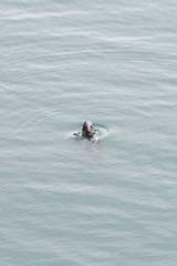 M2172381 E-M1ii 300mm iso250 f8 1_250s (Mel Stephens) Tags: animal animals wildlife fauna seal nature coast coastal uk scotland aberdeenshire bullers of buchan 20180617 201806 2018 q2 2x3 4x6 tall olympus mzuiko mft microfourthirds m43 300mm pro omd em1ii ii mirrorless best