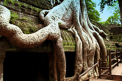 Roots and Ruins of Ta Prohm, Cambodia (Chandana Witharanage) Tags: cambodia asia southeastasia taprohmtemple ruins angkorwat siemreap overgrown roots bayon rajavihara unescoworldheritagesite khmertemple architecture archaeologicalsite doorway history buddhist buddhism roof attraction d e fantastic green historical incredible interesting journey landscape nature naturallight natural outdoor old place photographer photography picture perspective unique religion sightseeing stunning sight travel tour tourist tourism touring traveling view vista visiting wonderful world explore canon7dcamera canon7defs18200mmf3556is photographybychandanawitharanage