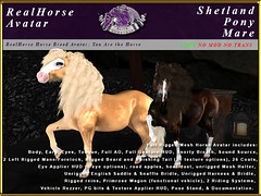 Elite Equestrian's new RealHorse Shetland Pony (honeyheart1) Tags: pony shetland realhorse horse sl secondlife glitter palomino chestnut