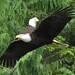 Eagles 5i