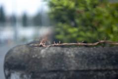 L1020632c (haru__q) Tags: leica m8 leicam8 leitz xenon barbed wire barbedwire 有刺鉄線