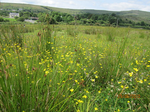 wet grassland Connemara (1)