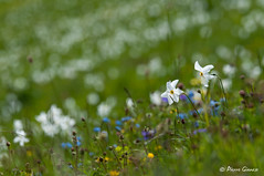 2 parmi tant d'autres (Pierrotg2g) Tags: fleurs flowers nikon d90 tamron 70200