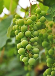'De druiven zijn zuur'